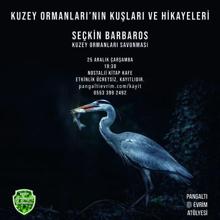 Kuzey Ormanları'nın Kuşları ve Hikayeleri