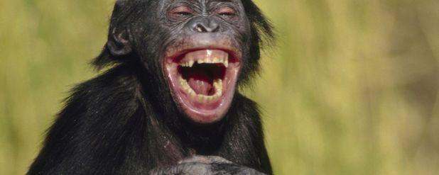 Gülmenin Evrimsel Kökenleri Eğlenmeye Değil, Hayatta Kalmaya Dayanıyor!