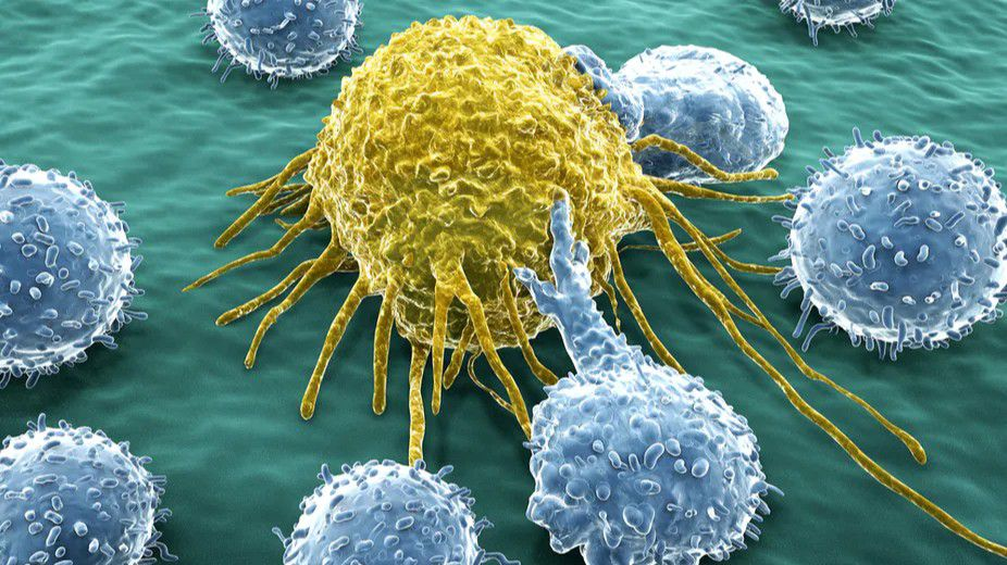 İmmünogözetim: Bağışıklık Sistemi, Kanser ile Nasıl Mücadele Ediyor? Kanser Hücreleri, Bağışıklık Yanıtlarından Nasıl Kaçıyor?