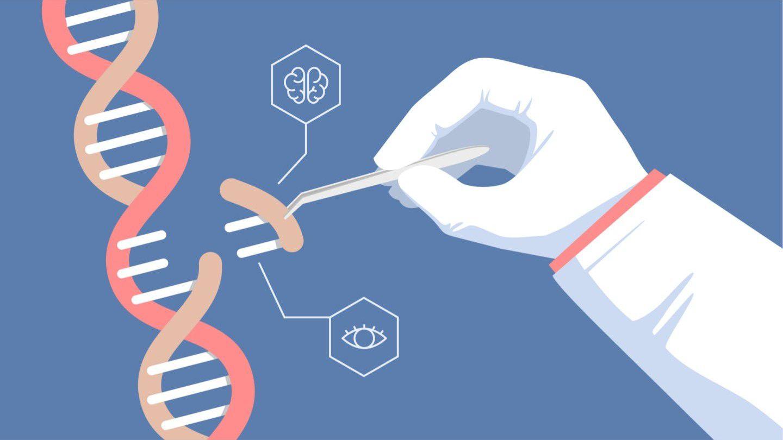 Genetik Muhendisligi Nedir Evrim Agaci