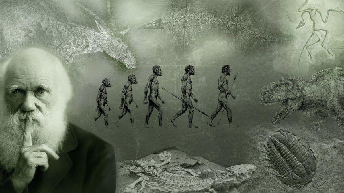 Darwin'in Evrim Teorisi Nedir, Neler Söyler? - Evrim Ağacı