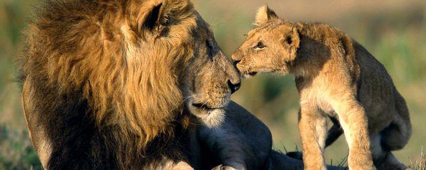 Hayvan İletişimine Giriş: Hayvanlar Nasıl İletişim Kuruyor?