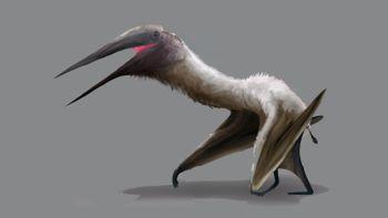 Yeni Bir Devasa Pterosaur Türü Tanımlandı!