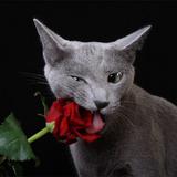 Rosa Rosarum