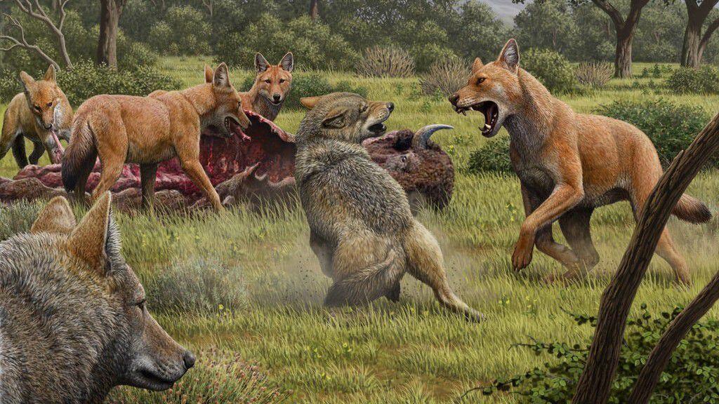 Aenocyon Cinsinin Dönüşü: Ulu Kurtlar (Dire Wolves), Aslında Bir Kurt (Canis) Türü Değildi!