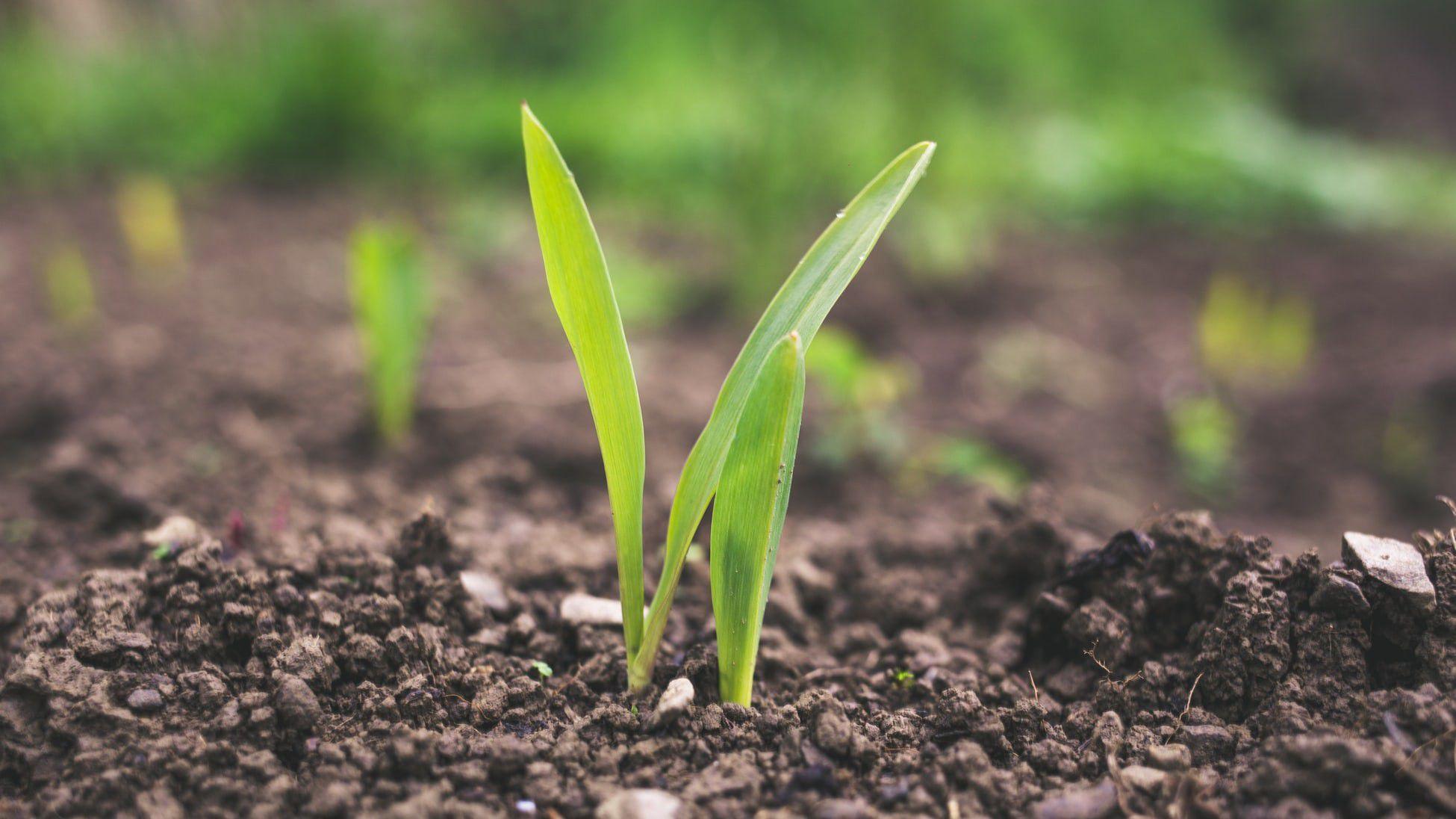 Bitkilerde Epigenetik Aktarım: Bitkilerdeki Kimyasal Hafıza, Sonraki Nesillerin Hayatta Kalma Şansını Etkiliyor!