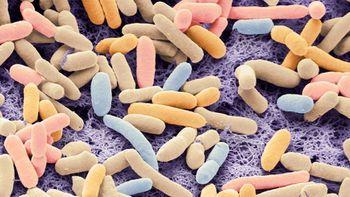 E. coli Bakterileri, Karbondioksit Yiyebilecek Şekilde Yeniden Tasarlandı!