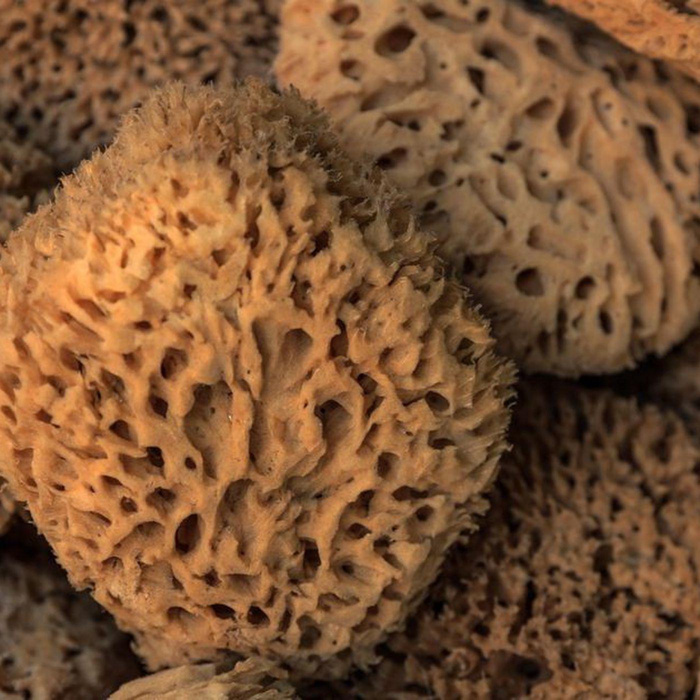 890 Milyon Yıllık Sünger Fosili, Keşfedilmiş En Eski Hayvan Olabilir!