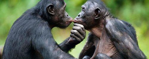 Aşkın Evriminin Psikolojik Temelleri: Aşk, Neden Evrimleşti?