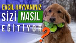 Pavlov'un İnsanları: Köpekler de Sizi Eğitiyor!
