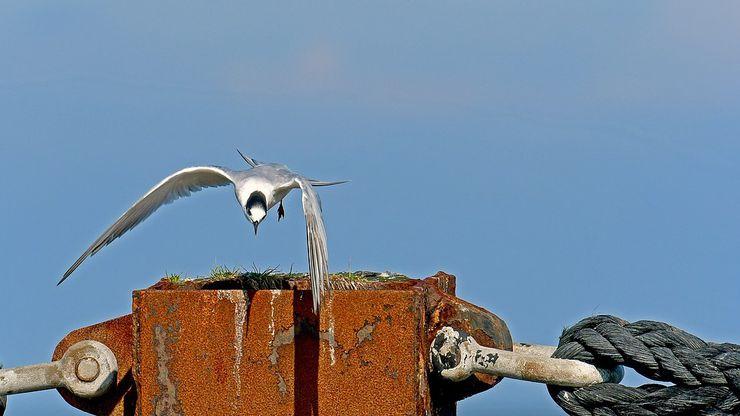 Akdeniz'deki Tehlike: Tarımsal Faaliyetler ve Yasa Dışı Avcılık, Akdeniz'de Ötücü Kuşların Hayatını Tehlikeye Atıyor!