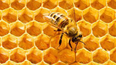 Arılar Peteklerini Neden Altıgen Yaparlar? Bunu Nereden Biliyorlar veya Nasıl Öğrendiler?