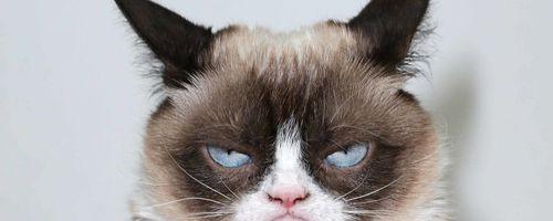 İnternette Kediler Neden Bu Kadar Popüler?