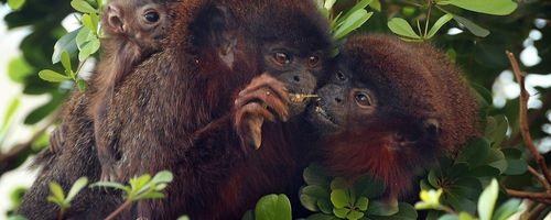 Tek Eşlilik ve İnsan Evrimi: İnsan, Tek Eşli Bir Hayvan Türü mü?